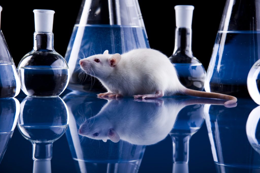 research shows that animals and humans The research findings are encouraging, so it makes sense to conduct more studies on how human-animal interaction influences our health we don't yet know precisely what types of animals influence what types of health issues (physical, mental, and social well-being) and what characteristics about human-animal interaction are most important.